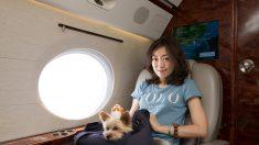 プライベート・ジェットで愛犬と休暇旅行、香港の旅行会社が企画