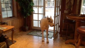家に入りたくても入れないワンコ、そのわけは?