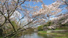 【散歩道で見た花や風景】立田山自然公園(熊本市)