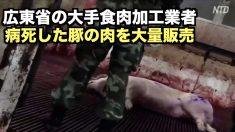 【動画ニュース】広東省で病死した豚の肉が市場に大量流入