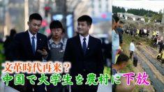 福建省が新卒者600人の農村動員モデル活動に着手「文革時代に後退するのか」
