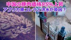 中国の豚肉価格85%上昇 庶民は「買えない」「長い間食べていない」