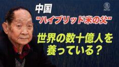 水稲研究の権威・袁隆平氏を批判したネットユーザーを逮捕